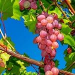 Antioxidant natural – Antioxivita