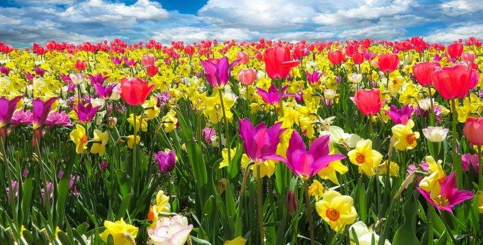 Remedii naturiste pentru a combate alergiile