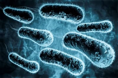 Cauzele aparitiei infectiei urinare